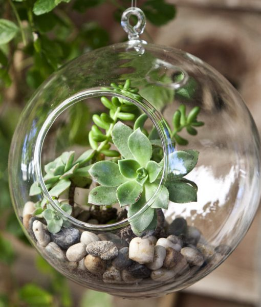 GivingPlants.com Gifts That Grow